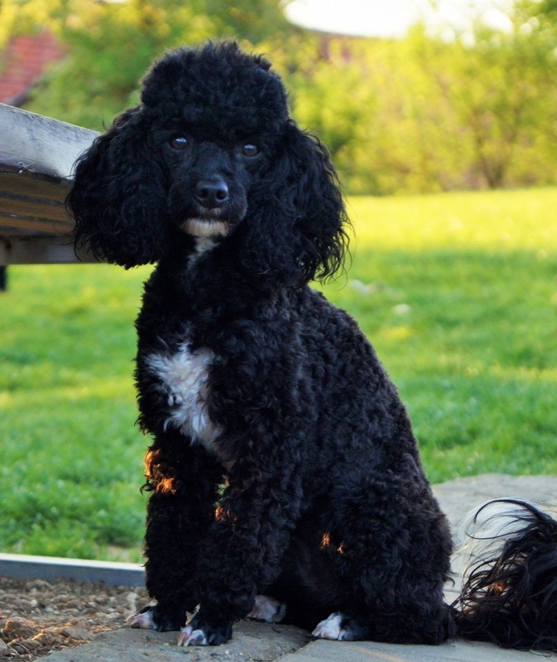 Pin Von M Hari Auf Pet Projects Lustige Hunde Hundebilder Sweet Dogs