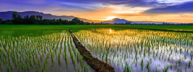 Chiang Mai Travel Guide and Tourist Information | Flight Centre