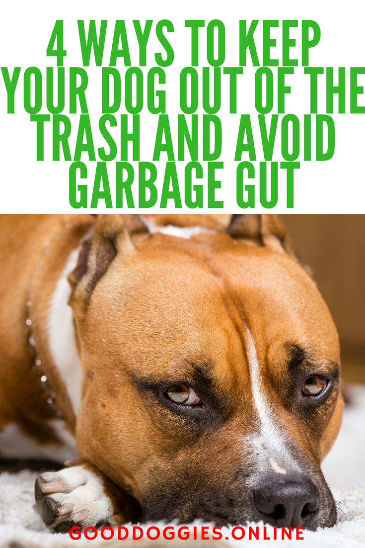4 Ways To Keep Your Dog Out Of The Trash And Avoid Garbage Gut
