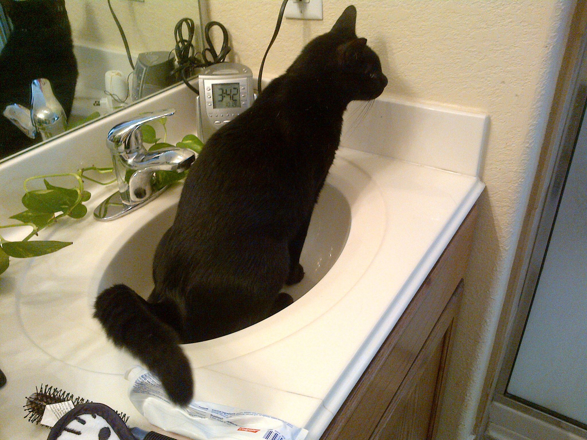 bengal bozo pissing all the rage sink
