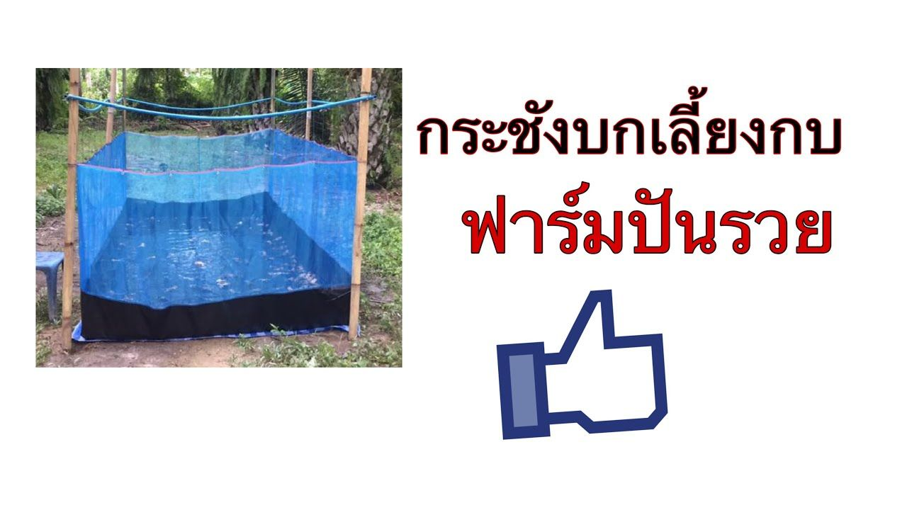 โทร 098 4639916 มาด กระช งบกก นค ะ ฟาร มป นรวย Youtube กบ