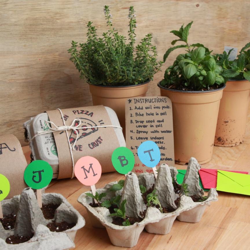 Seed Starter Kit Gardening Seeds Gift Vegetables Plants