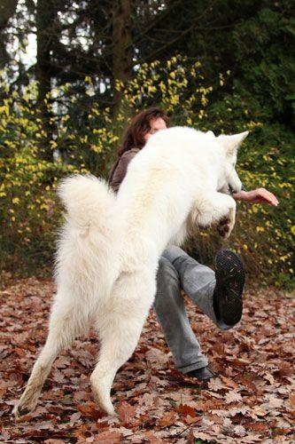 Wie Du Dem Hund Das Anspringen Abgewohnen Kannst Hunde Hunde Tiere Hund Hunde Schlafen