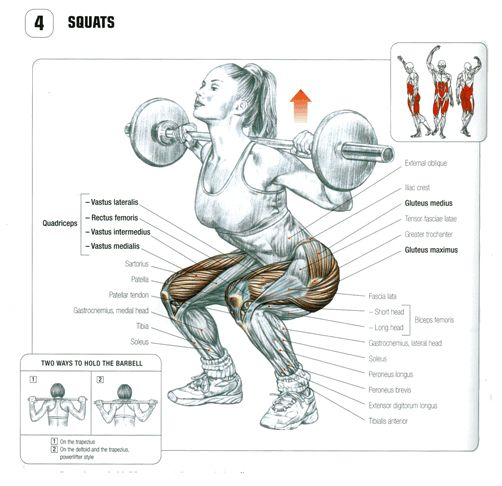 Squat anatomy. #2 bar placement for powerlifters | sketch ...