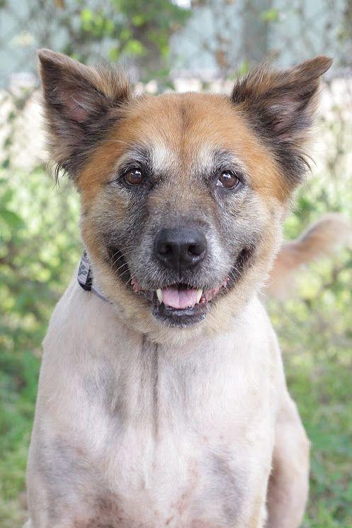 Gollie Dog For Adoption In Pensacola Fl Adn 532892 On