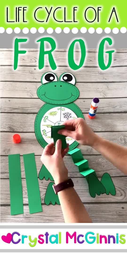 Life Cycle of a Frog Craft (Spring Craft for Kids)