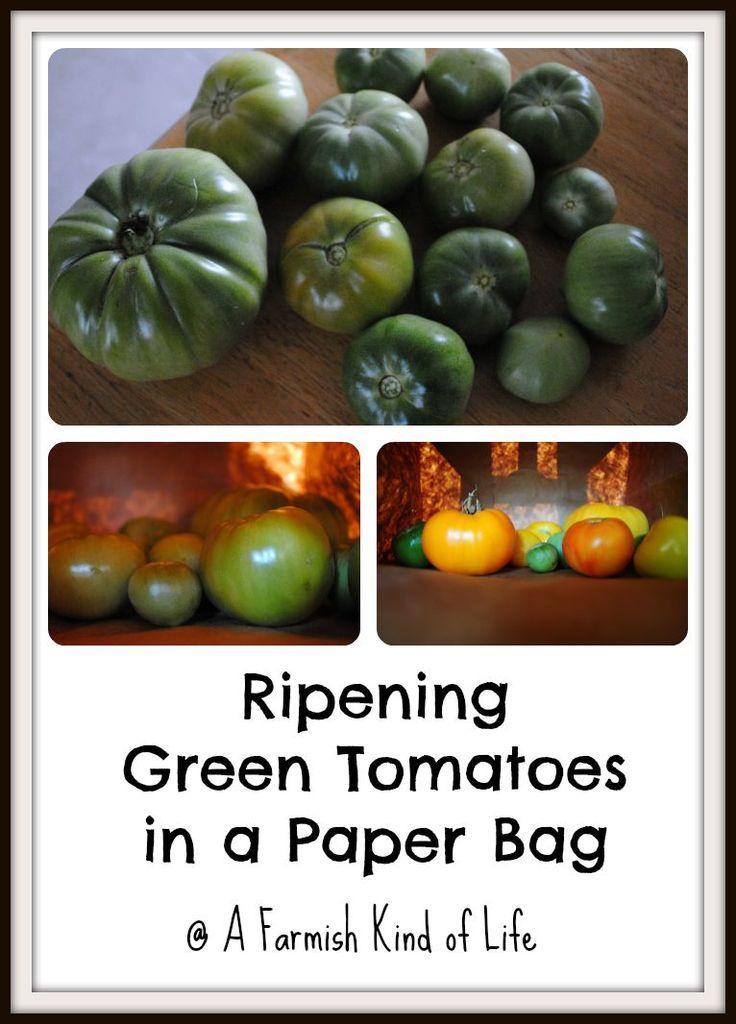 Stubborn Green Tomatoes Ripen Them In
