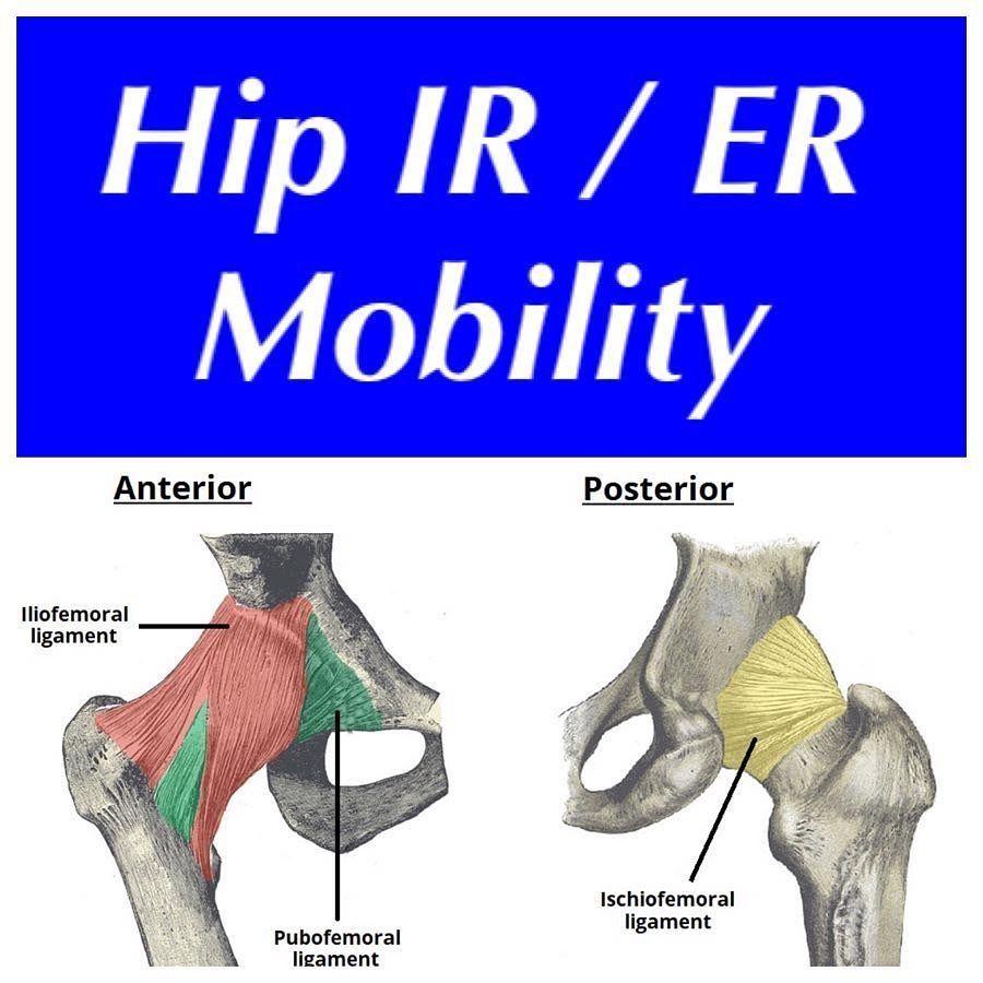 26+ Hip external rotation muscles inspirations