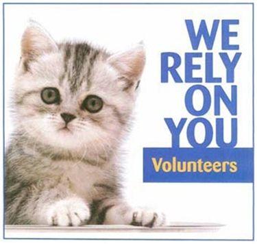 Cat care volunteers needed Cat care, Volunteer, Cats