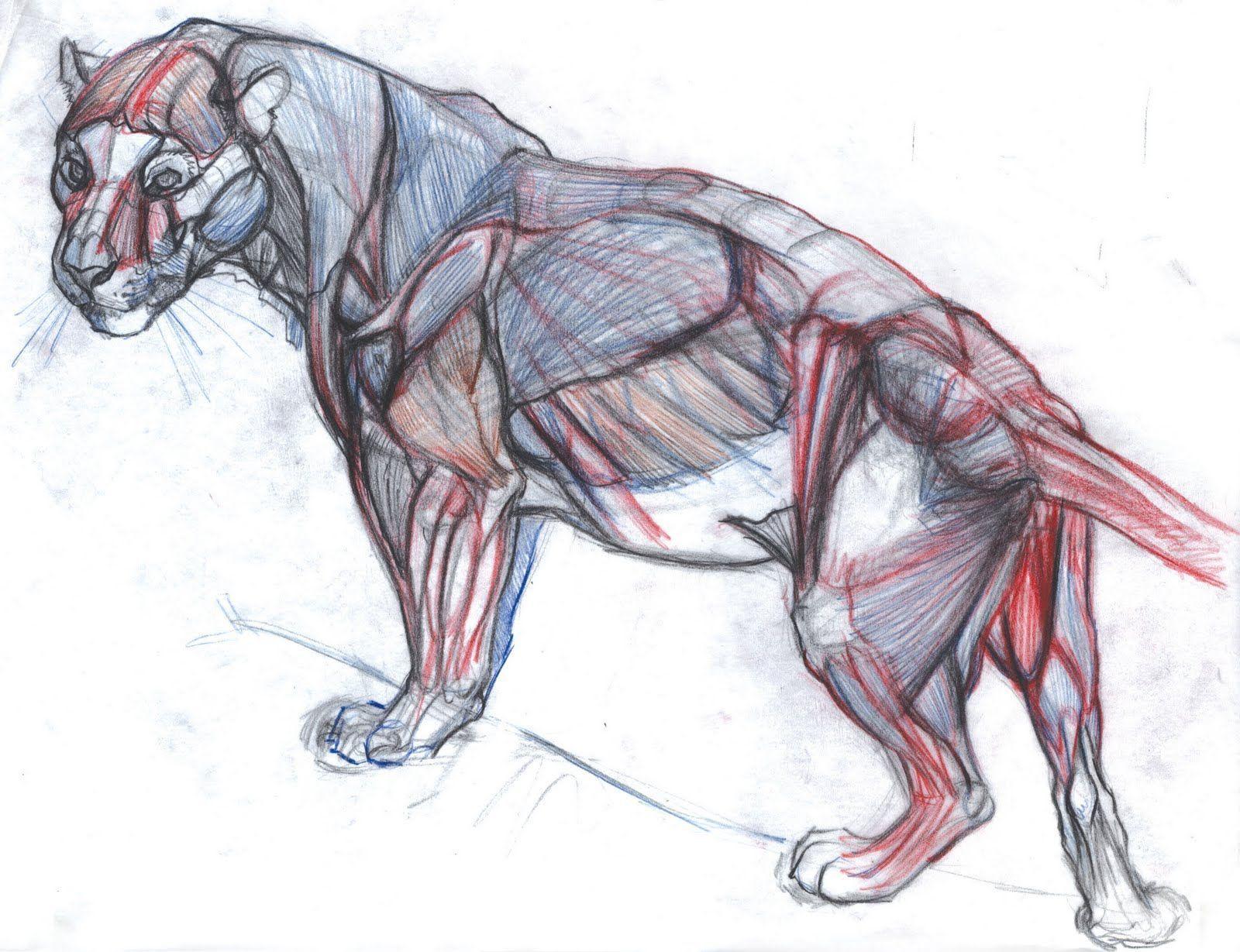 Картинки с анатомии животных