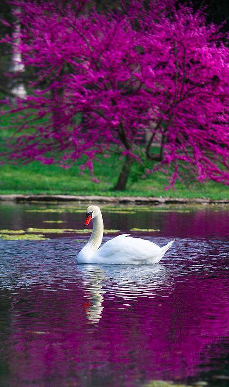 Spring Grove Swan is part of Swan - Spring Grove Cemetery Cincinnati, OH