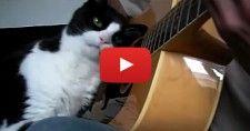 Drôles de chats qui savent se faire caresser