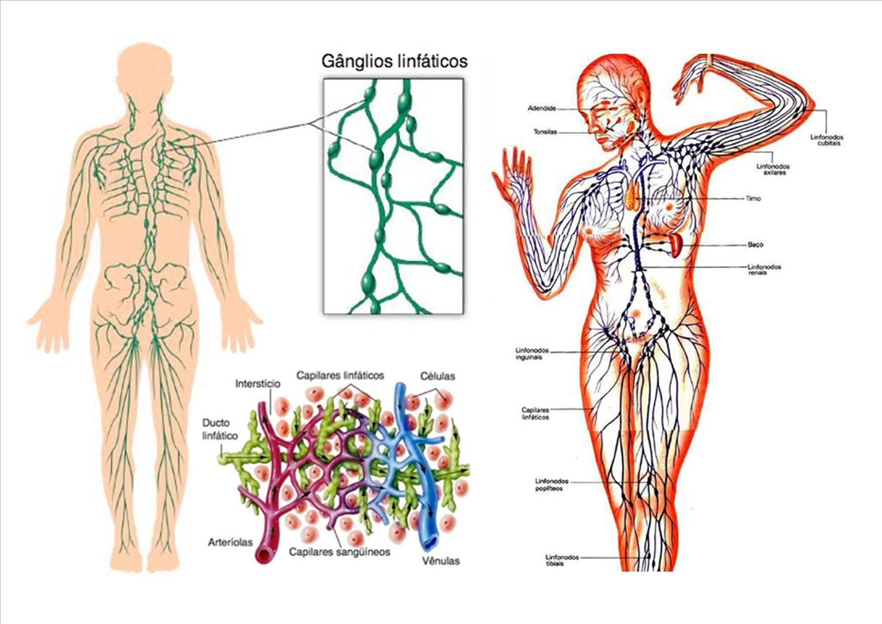 Sistema linfático. | CIENCIAS NATURALES-3º | Pinterest | Sistema ...