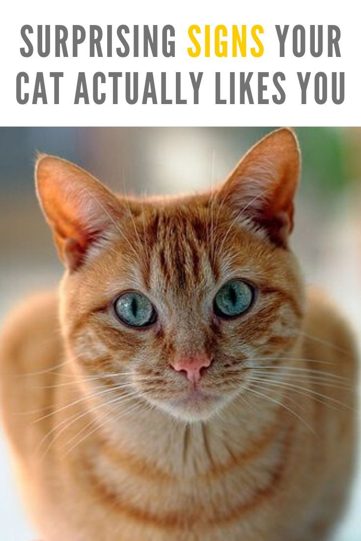 6 surprising signs your cat actually likes you cats