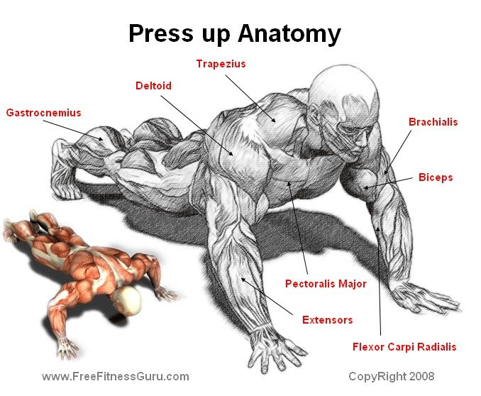 Press Up Anatomy Health Gym And Exercise Tips Pinterest
