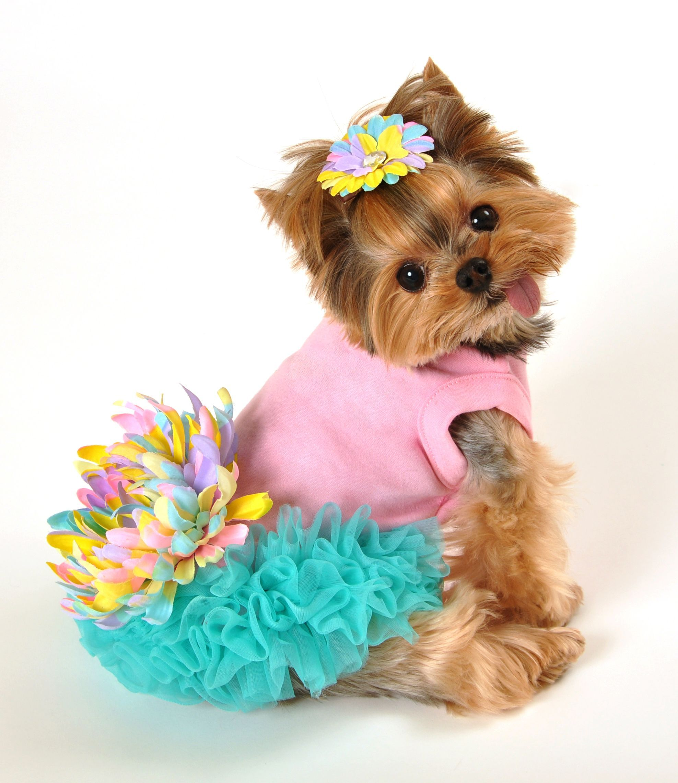 Leilani Dog Dress All Things Pet Care Fashion