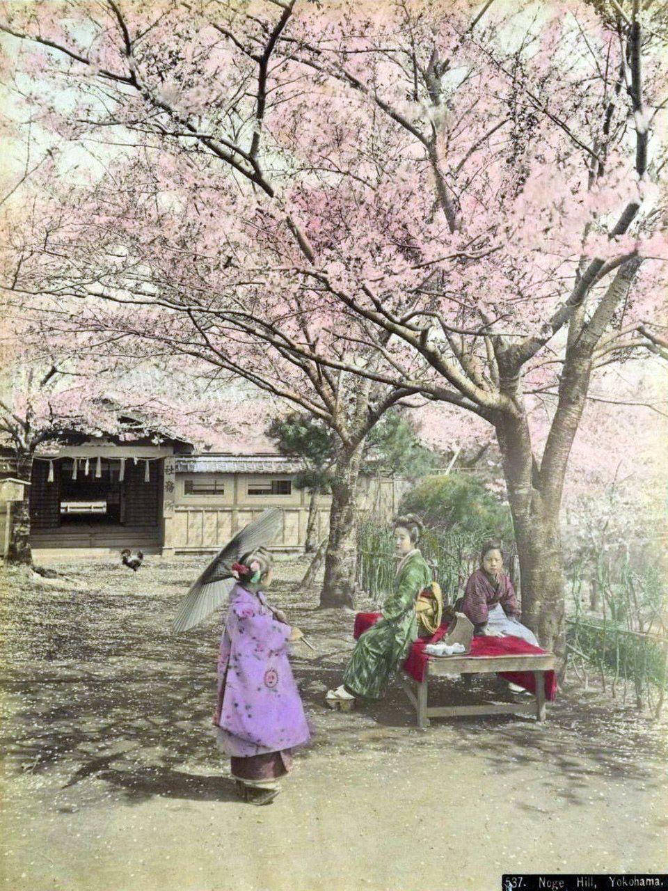 Kusakabe Kimbei 日下部 金兵衛 (1841-1934) Noge hill, Yokohama - Hand-colored albumen print - Japan - 1880s Nippon-Graph