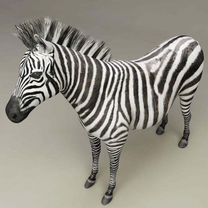 3d Model Zebra Modelled Zebra 3d Model Model