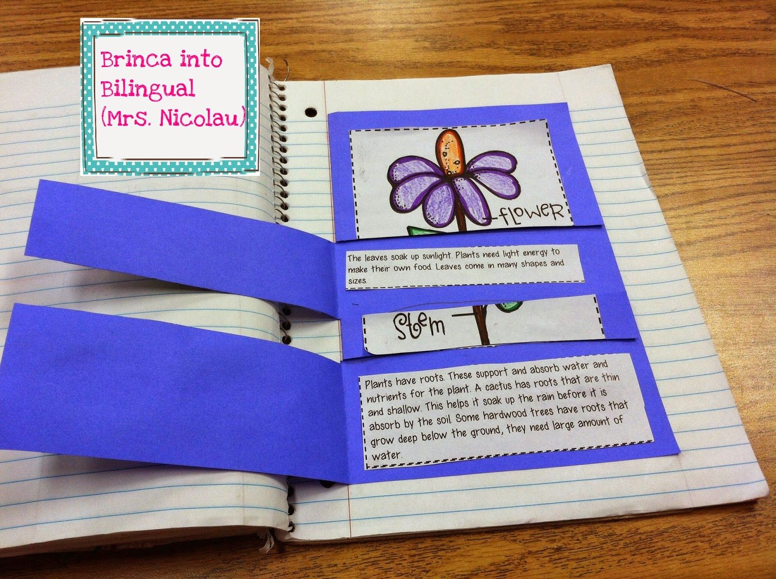 Foldable Flipbook To Introduce And Learn About Plant Adaptations To Your Students For Free The