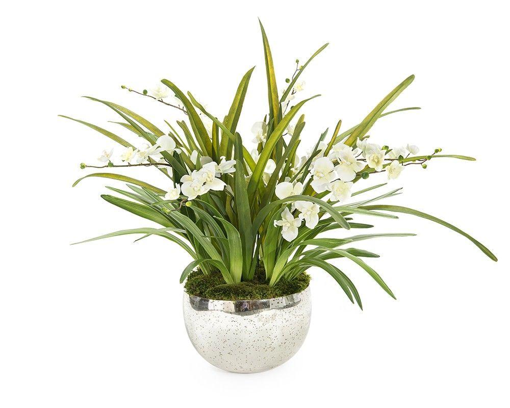 Wild Orchids - Florals - Botanicals - Accessories & Botanicals - Our Products