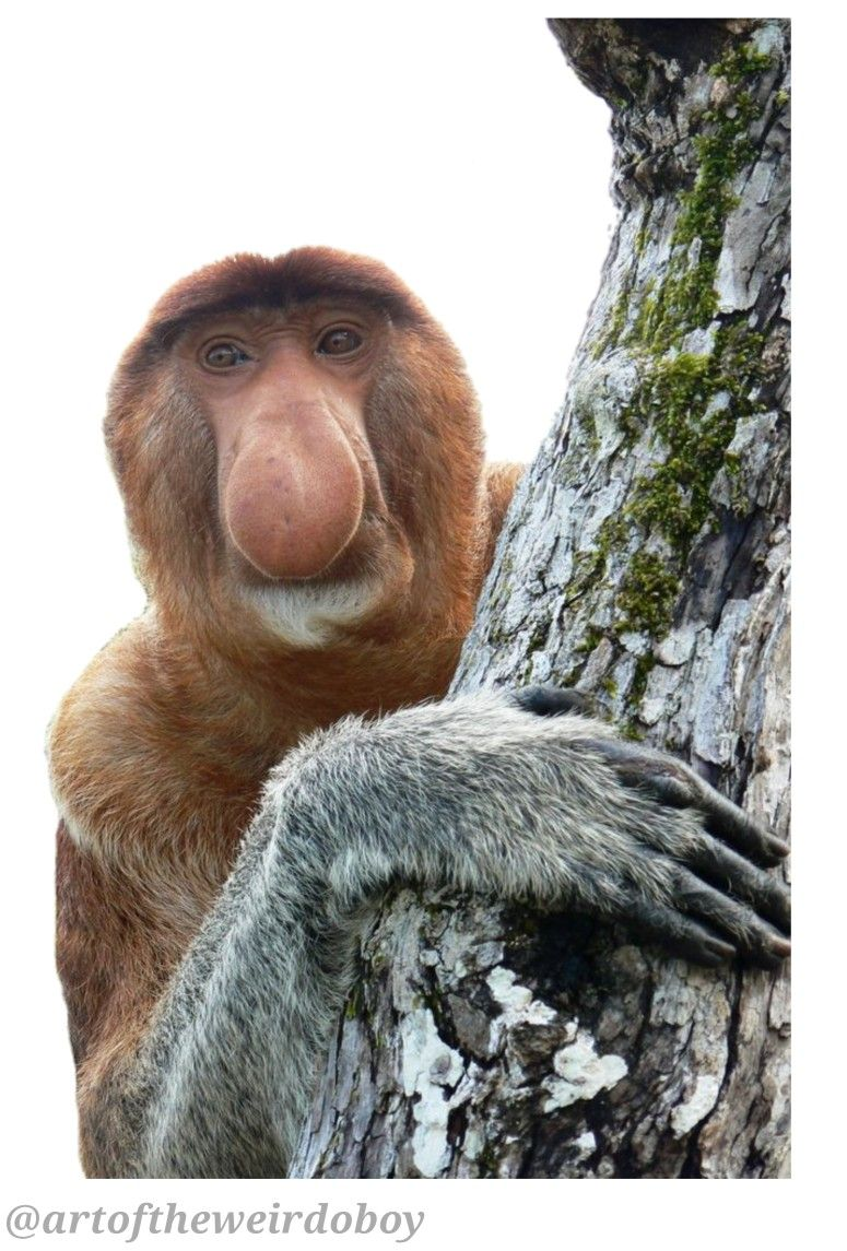 Monkey From Alex Strange Love Polyvore Png Png Mood Board Animals