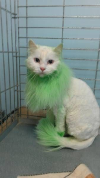 Community Post 15 Wacky Pet Dye Jobs Hot Or Not Cat Grooming Silly Dogs Cat Grooming Styles