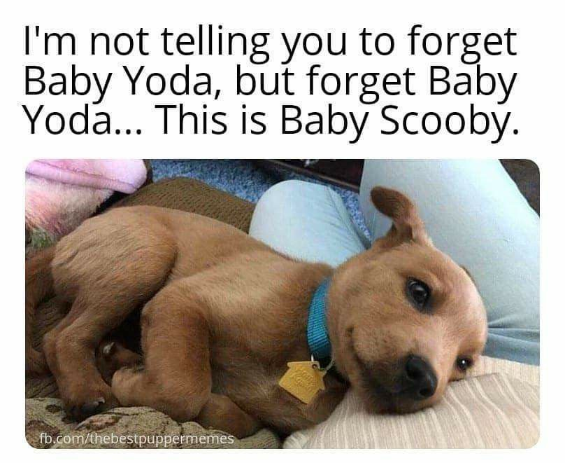 Pin By Matilda Cait On Dogs In 2020 Cute Animal Memes Cute Baby Animals Baby Animals Funny