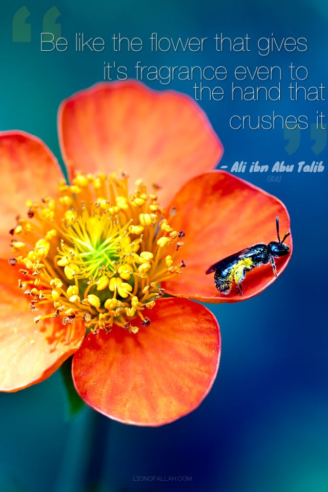Be Like The Flower Inspiring Words Flowers Islamic Quotes