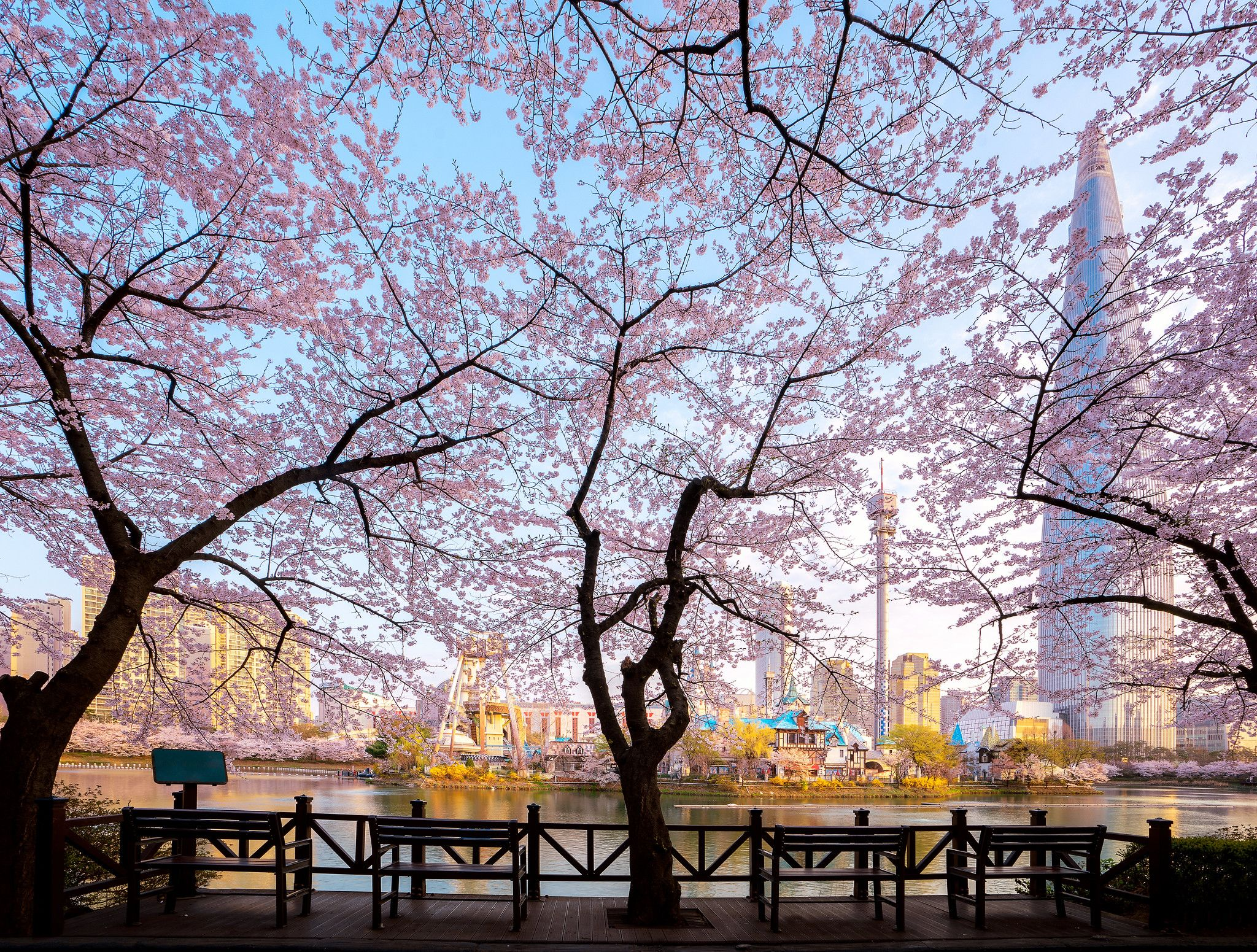 Cherry Blossoms Around Seokchon Lake Park Obscuring The Lotte World Tower Seoul South Korea 20481551 Lotte World Lake Park Seoul Photography