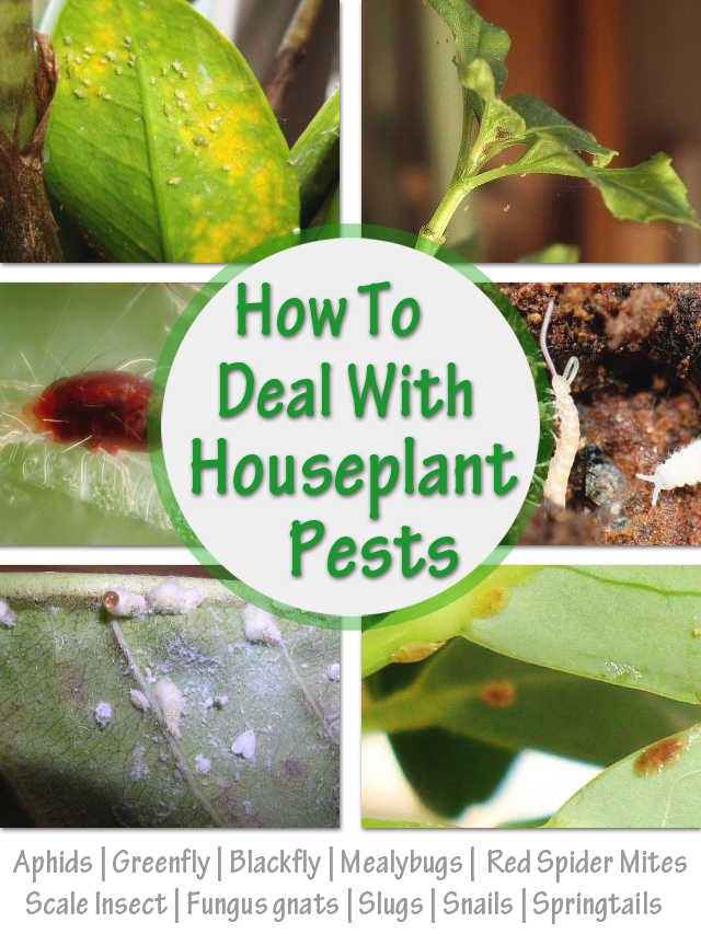 How To Deal With Houseplant Pests Plant Pests Plants House Plants