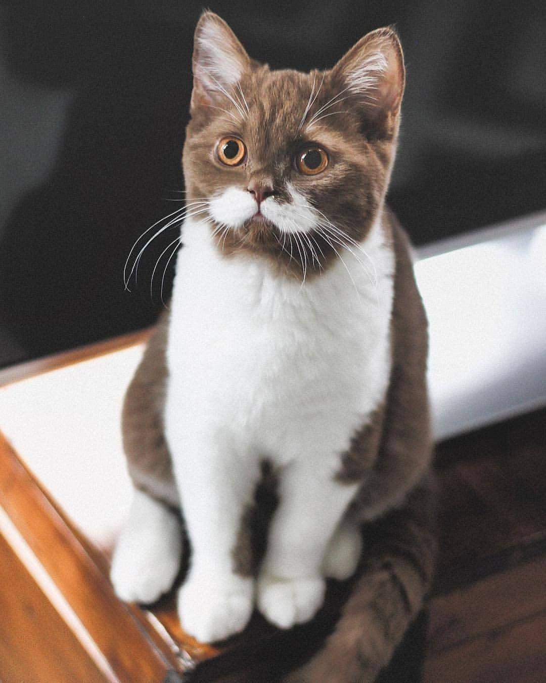 Zu Schwer Cat Katze Dog Hund Cat Dog Hund Katze Oily Schwer Zu Hunde Susse Tiere Hund Und Katze
