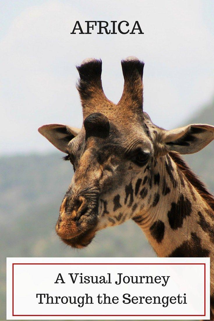 a visual journey through the serengeti photo essay photo essay  a visual journey through the serengeti photo essay