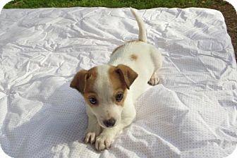 Pitbull Mix Rescue Dogs