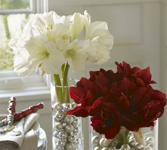 Faux Amaryllis Stems | Pottery Barn...like theses as well, probably no filler or something else