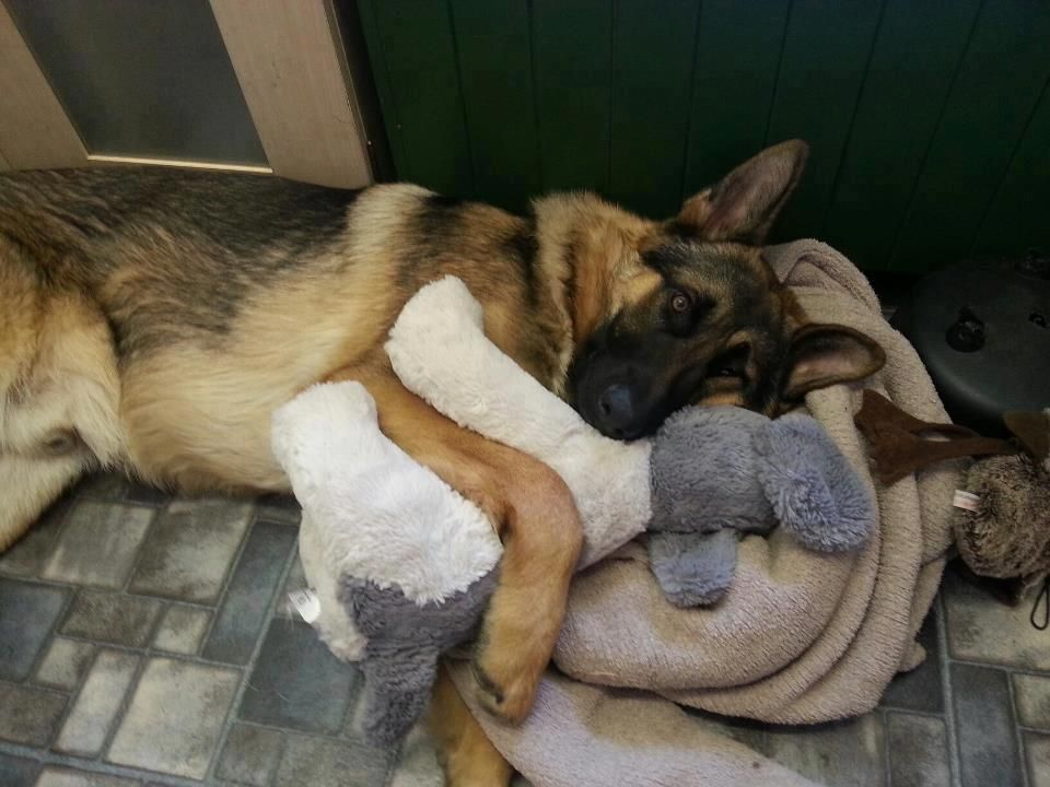 They are so protective and gental at the same time www.capemaydogs.com