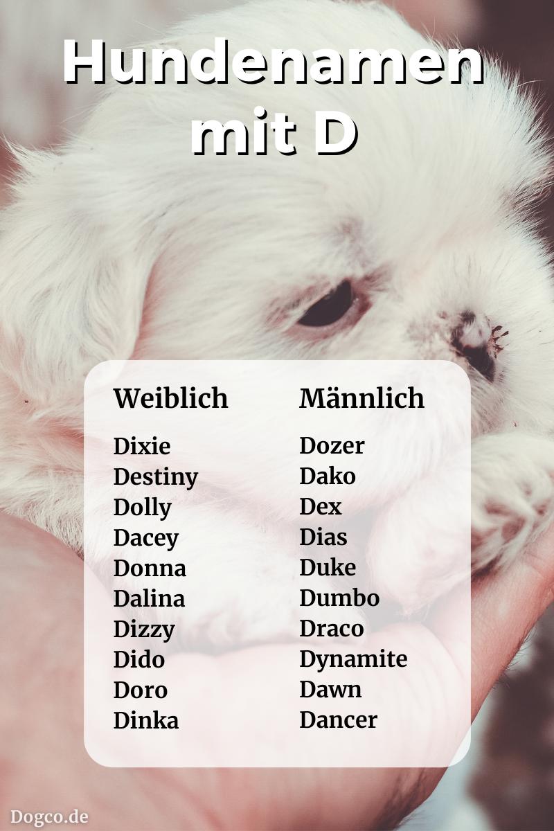 Hundenamen mit D: weiblich und männlich mit Bedeutung als