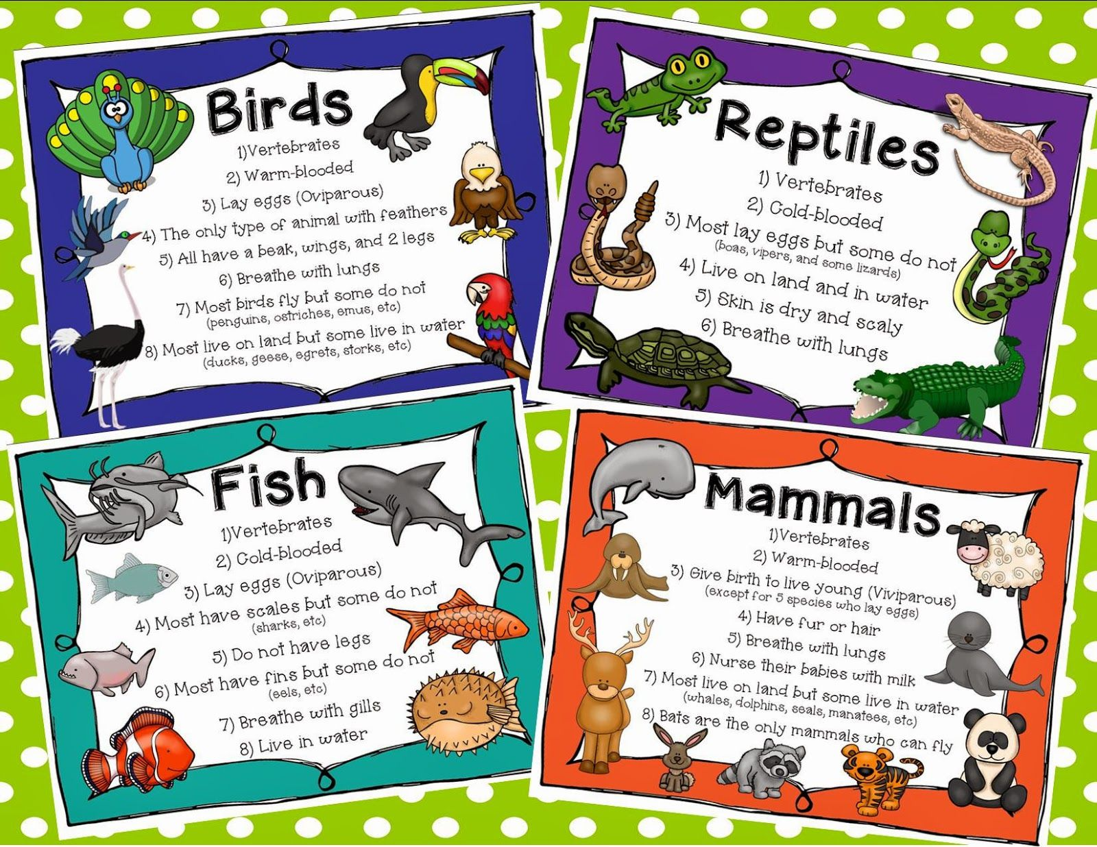 hight resolution of classifying animals - Buscar con Google   Animal classification