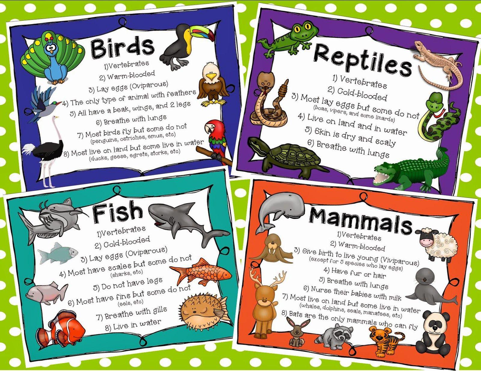 worksheet Classifying Animals Worksheet animal classification habitats and classification