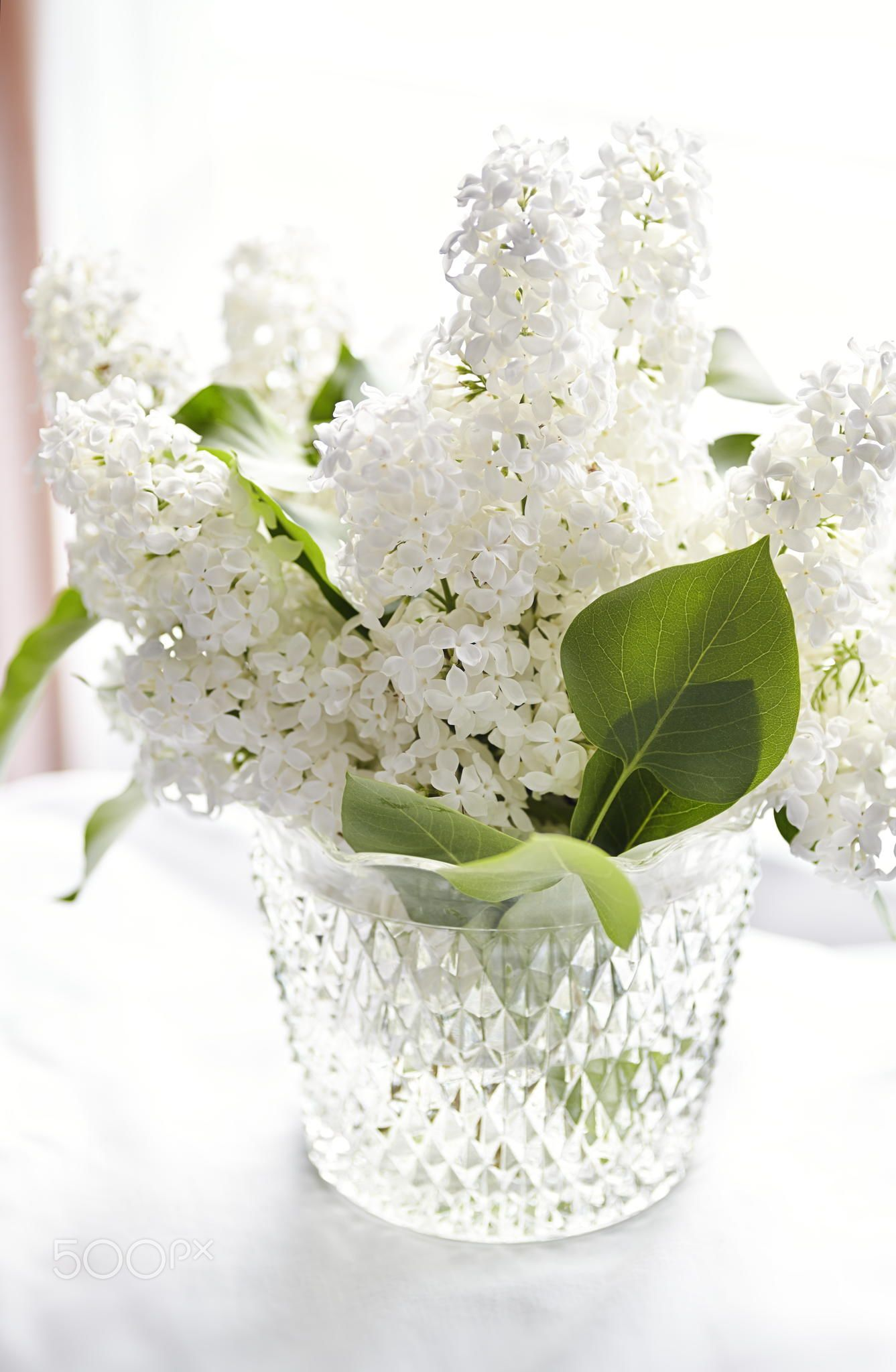 White Lilac Fresh Cut White Lilac Flowers In A Vintage Crystal