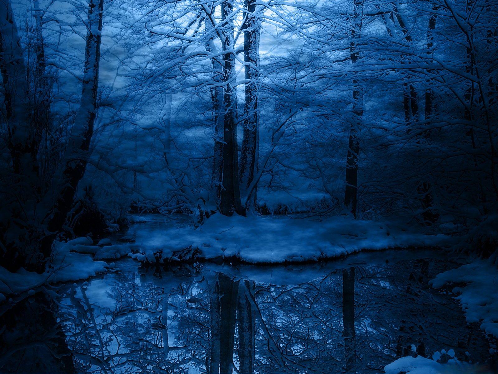Скачать обои зима, деревья, снег, синий, иней, холод ...