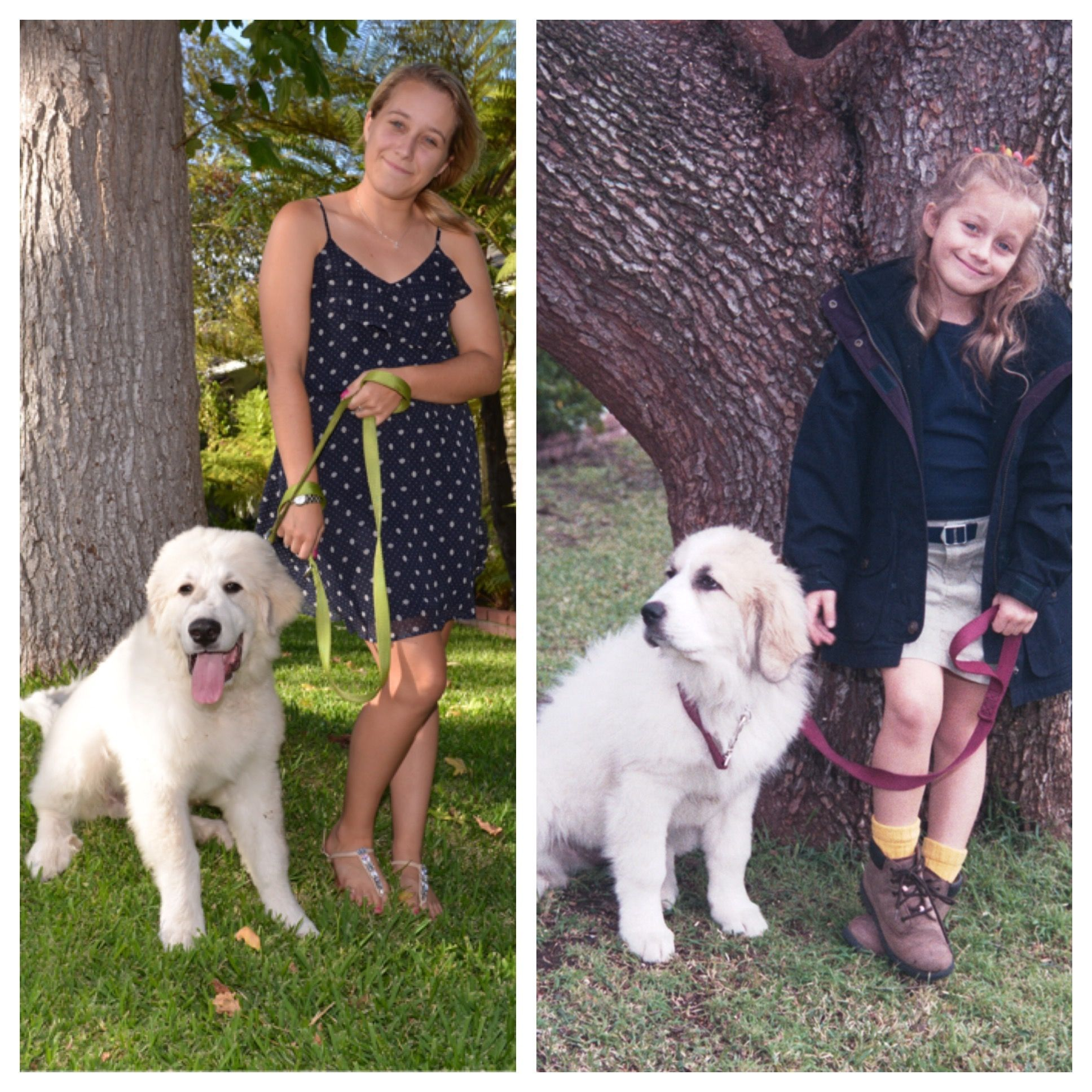 Same Girl Different Dog Great Pyrenees Puppies Great Pyrenees