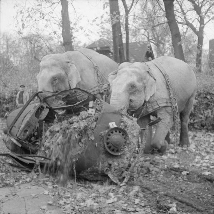 Circus elephants move a wrecked car from a bombed-out garage Hamburg ...