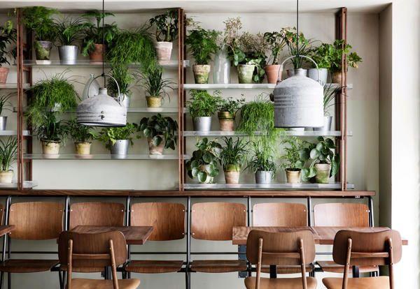Piante da interno al centro dell 39 arredo di un ristorante for Elle decor interni