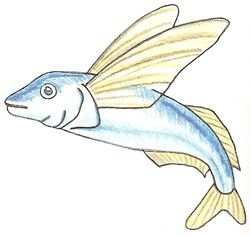 Exam Guide Online How To Draw A Flying Fish Fish Drawings Drawings Horse Painting