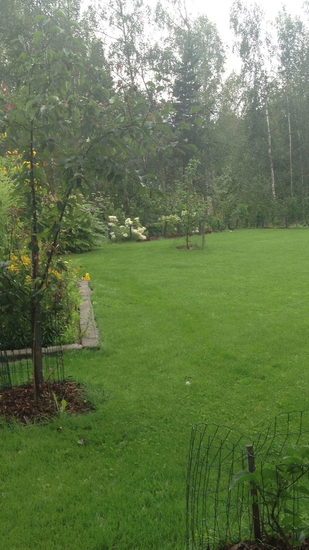 Nurmikko voi tänä vuonna hyvin, syyslannoitteen heitin viime viikolla. Vielä kerran lannoitetta ennen lumia ja sitten keväällä kalkkia.
