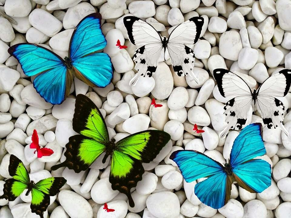 I Love You Hd Images Butterfly Wallpaper Butterfly Pictures Beautiful Butterfly Pictures