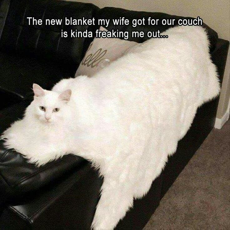 Click the Photo For More FUNNY and Cute Cat Videos and Photos #cutecats #catloverscommunity #cats #kittens #catvideos #funnycats #funnykittens