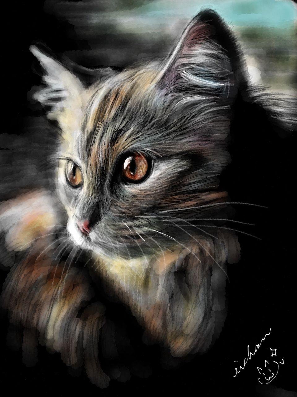 cats | Tumblr