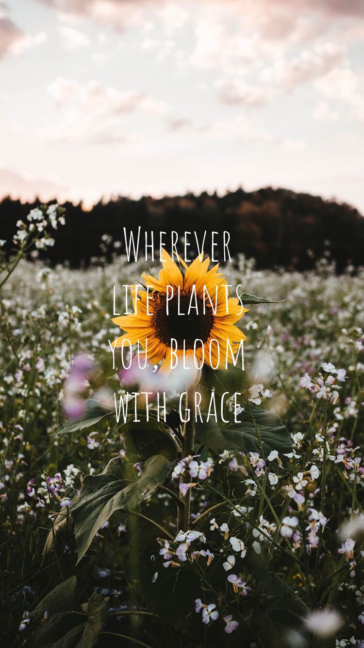 quotes sunflower sunset Sunflower quotes, Flower