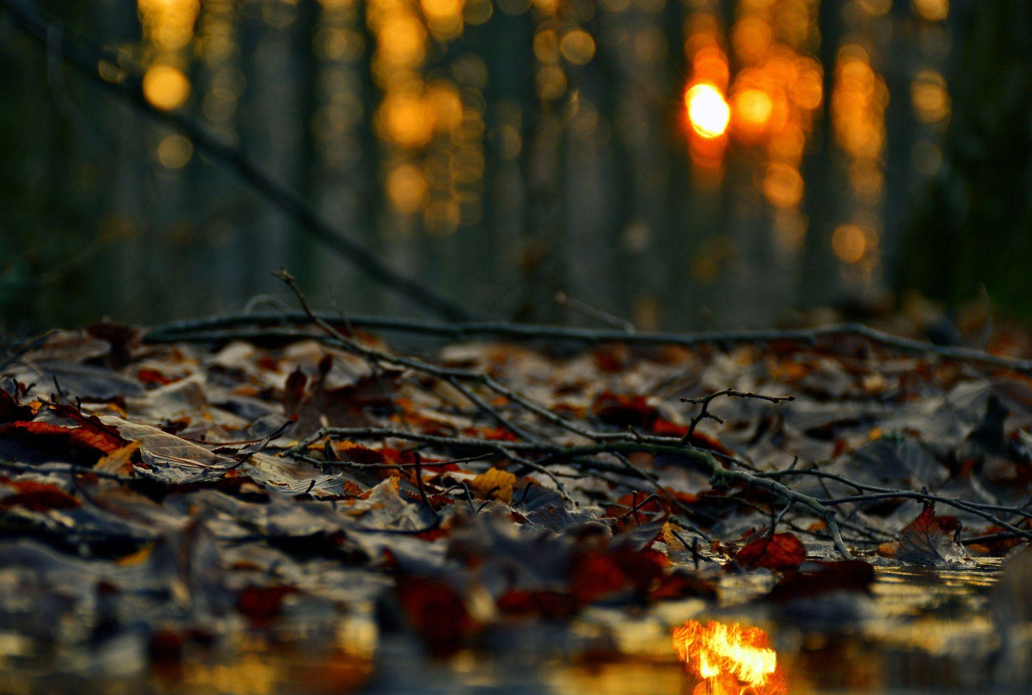 Fotograf kissing the leaves von Bogdan Vasilescu auf 500px